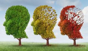 brain_aging